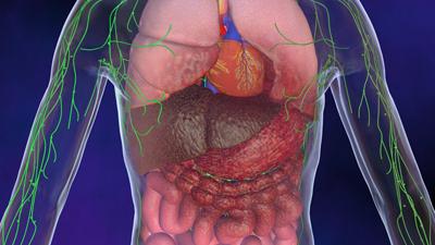 Le foie - Service de chirurgie viscérale - CHUV