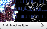 Brain Mind Institute