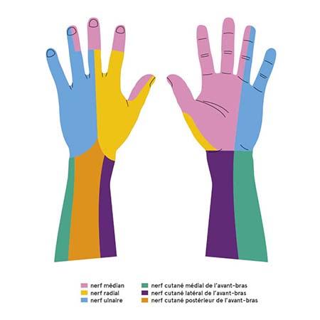 Lexique - Service de chirurgie plastique et de la main - CHUV