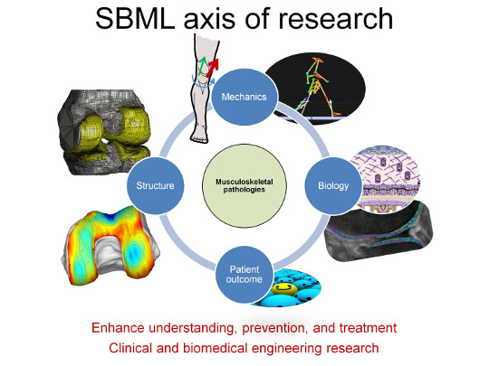 SBML - axis of research