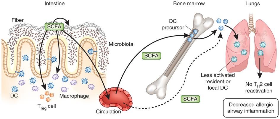 Links between diet and lung inflammation - Service de